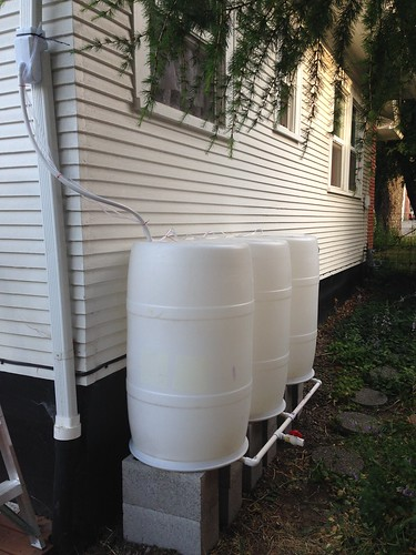 Ta Da! Finished 165-gallon rain barrel system, including vent lines from each barrel.