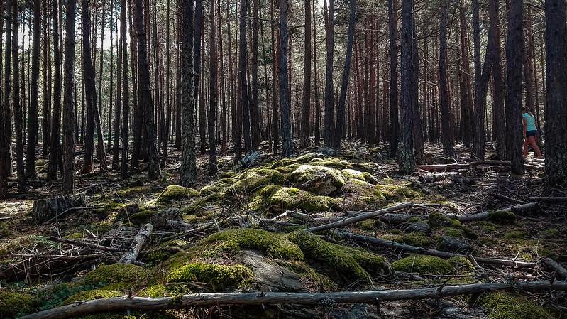 El Bosc de Virós