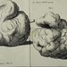 "Image from page 900 of ""Nova Acta Physico-Medica Academiae Caesareae Leopoldino-Carolinae Naturae Curiosum"" (1778)"