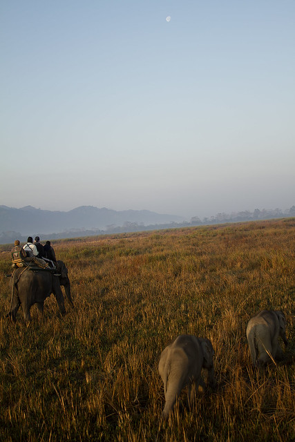 Kaziranga Expedition
