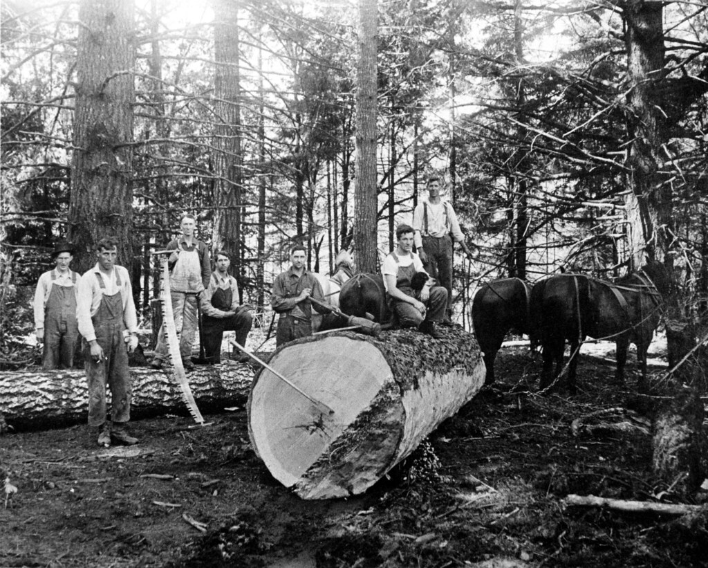Early Horse Logging Oregon Department Of Forestry Flickr