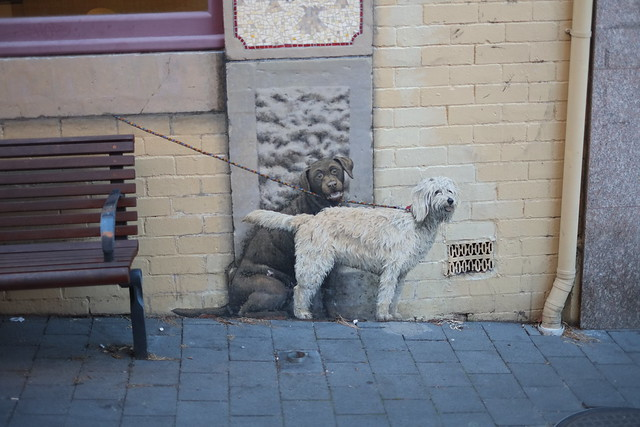 Hobart Dog Show