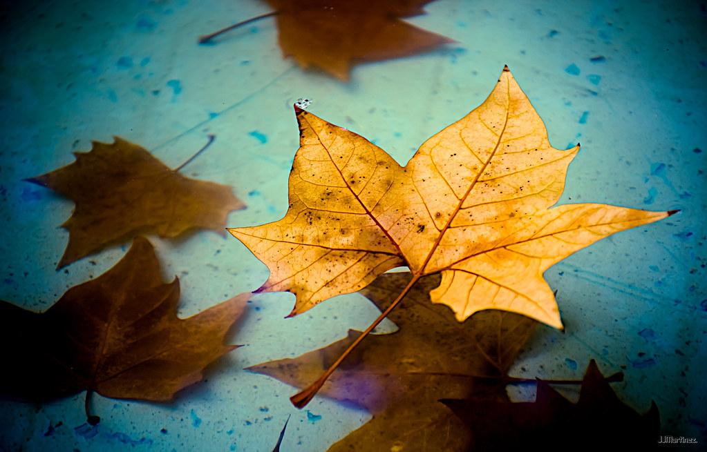 """""""leaves"""