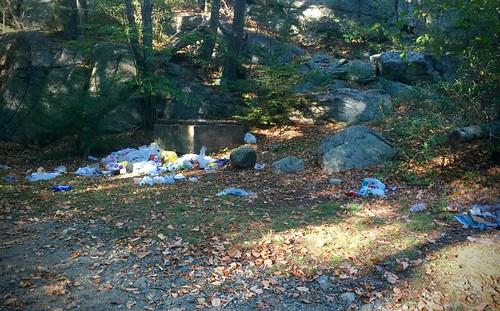 Pine Meadow Trash