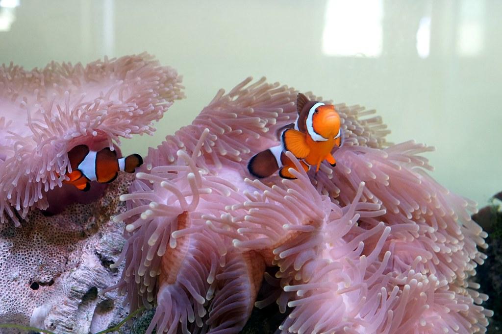 Andaman langkawi - coral nursery-013