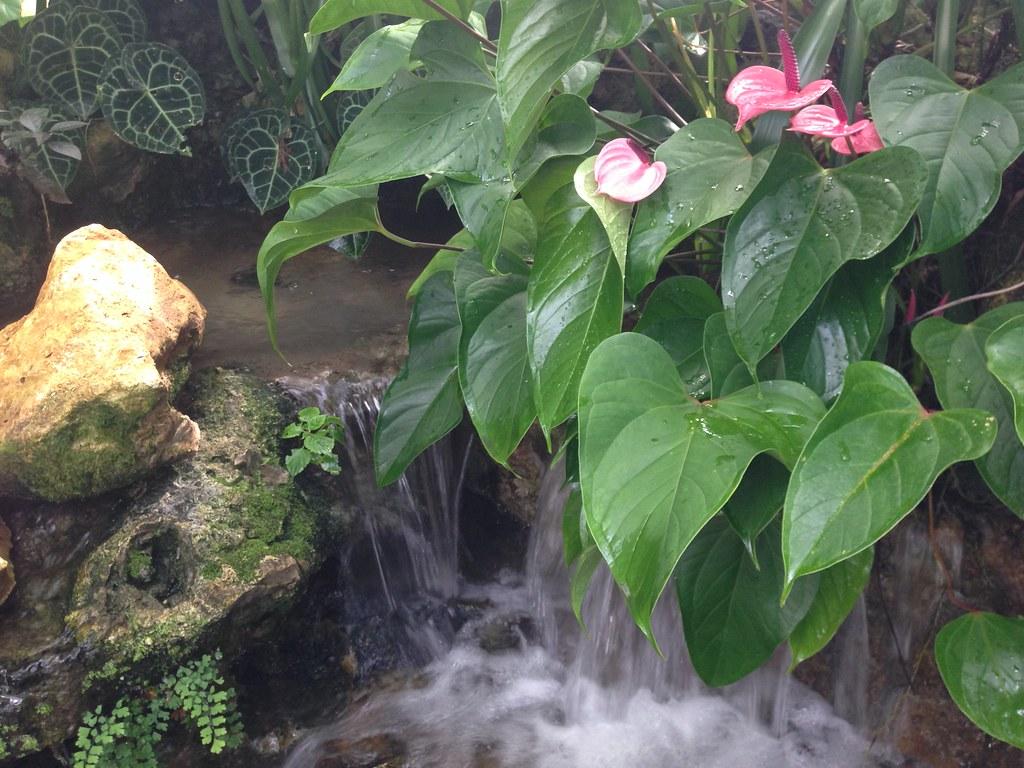 Uf Garden Seminar Tour Of The Flmnh Butterfly Rainforest A