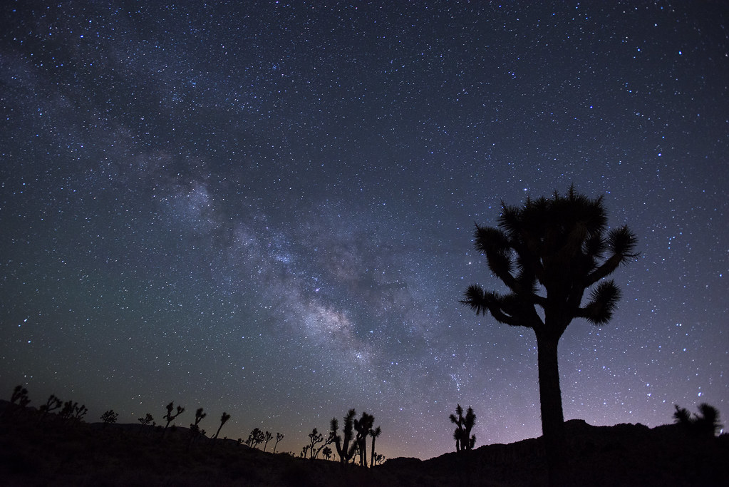 Joshua Tree National Park at night offers a spectacular view of the stars.