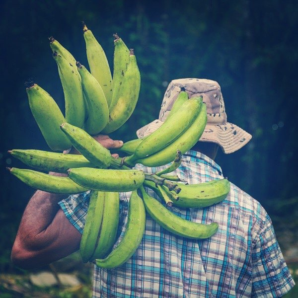 25 Fantastic Reasons To Pack Your Bags And Visit Blue Osa Right Now Nature Bananas