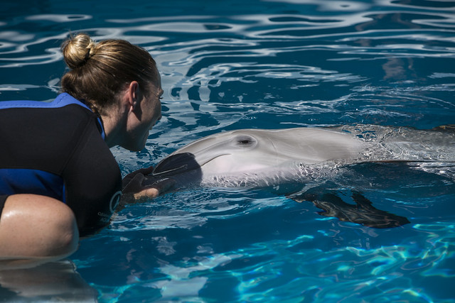 Image Result For Clearwater Marine Aquarium
