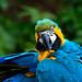 Papegaai Zoo Parc Overloon