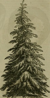 "Image from page 100 of ""The Illustrated annual register of rural affairs and cultivator almanac for the year .."" (1855)"