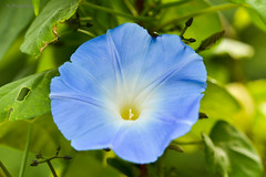 flower in blue