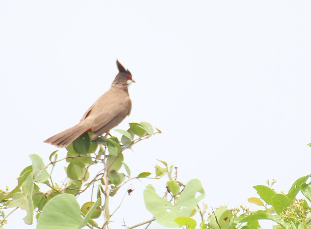 Birdman Watch 1.5 Million