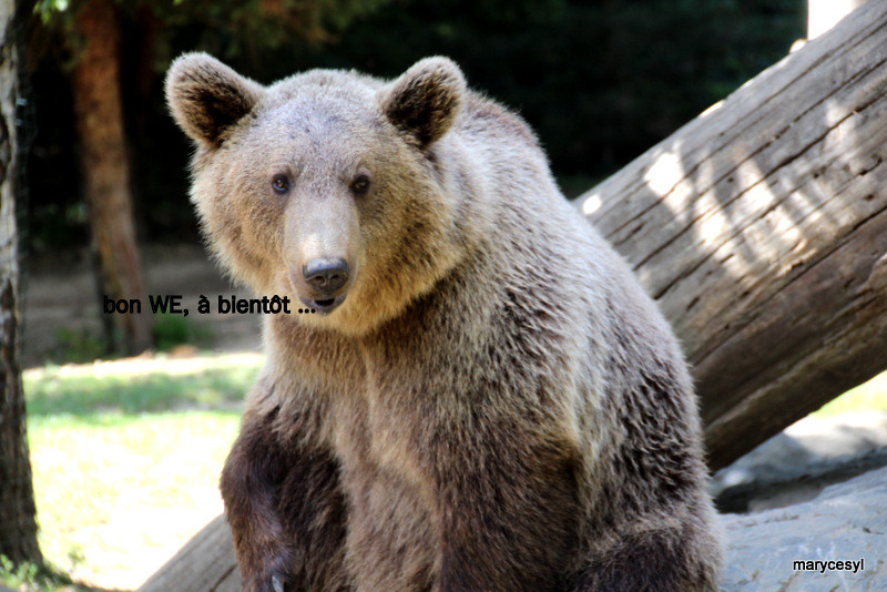 il ne faut pas vendre la peau de l 39 ours avant de l 39 avoir t flickr. Black Bedroom Furniture Sets. Home Design Ideas