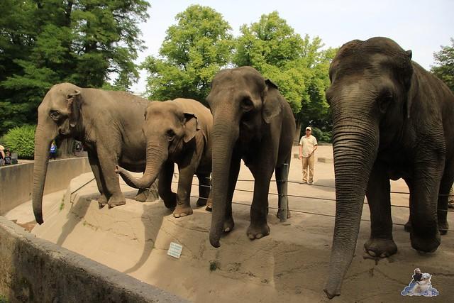 Tierpark Hagenbeck 04.07.2015  106