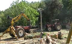 alberi tagliati sant'arsenio 03