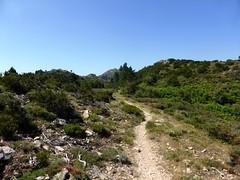 Sentier de la crête Vaccia - Cavalletti : après la borne 1285m