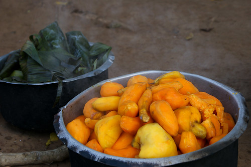 Vitamin A Orange Sweet Potato, Uganda