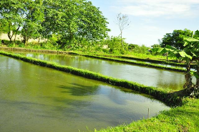 Fish Pond Bay Laguna Philippines Photo By Aisa Santos
