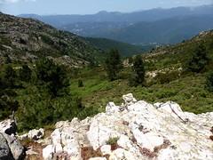 Sentier de la crête Vaccia - Cavalletti : le vallon du ruisseau de Calendola
