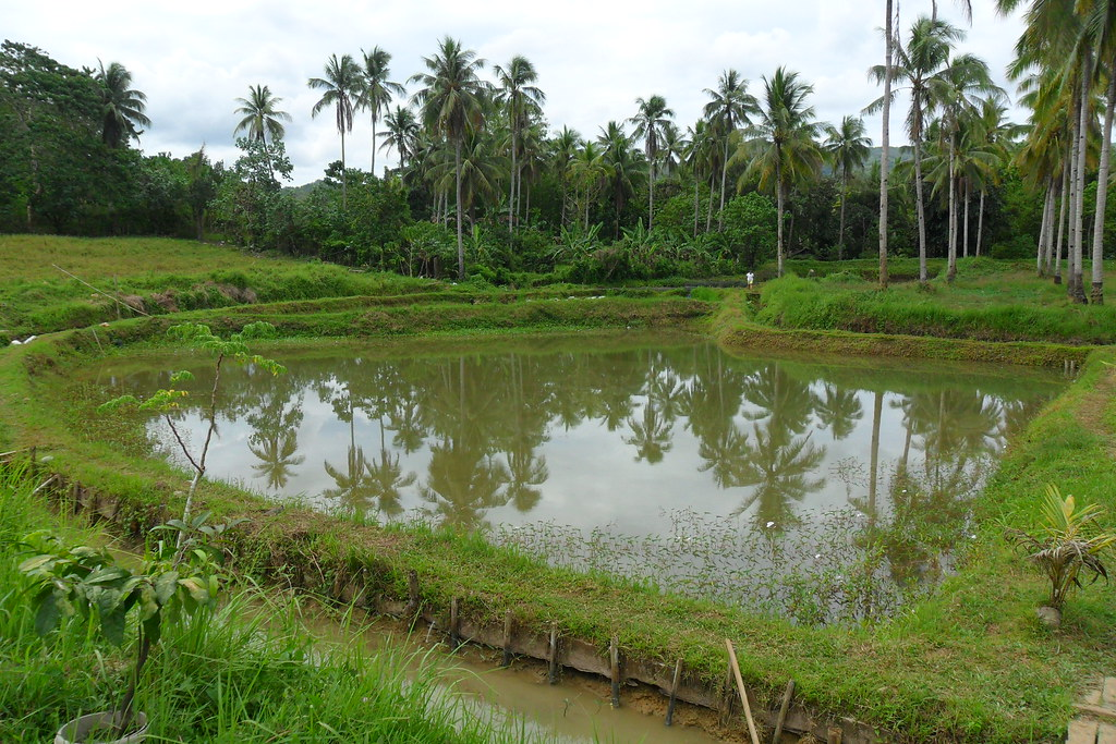 fishpond bontoc southern leyte philippines photo by le