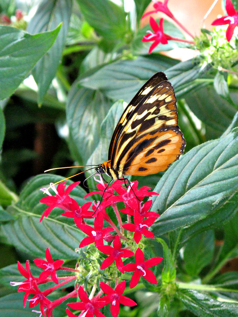Butterflies Live Exhibit Lewis Ginter Botanical Garden I Flickr