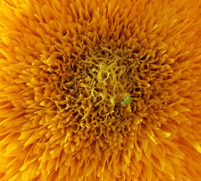 Sunflower Health Food Store Yuba City