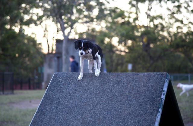 Brisbane Dog Show November