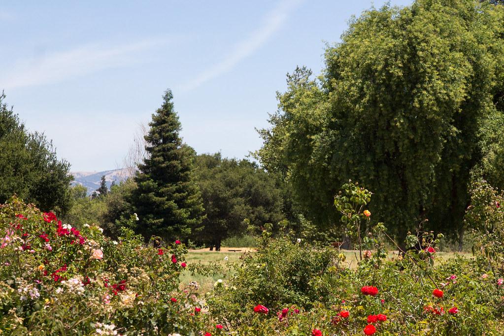 Heritage Rose Garden San Jose Canon Ef S 15 85mm F 3 5 5 Flickr