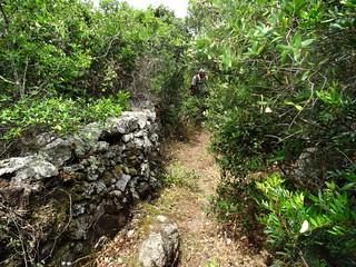 Le sentier vers le casteddu di u Conti Pazzu : murets