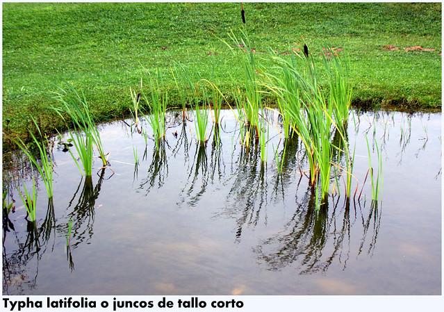 Photo for El jardin botanico gijon