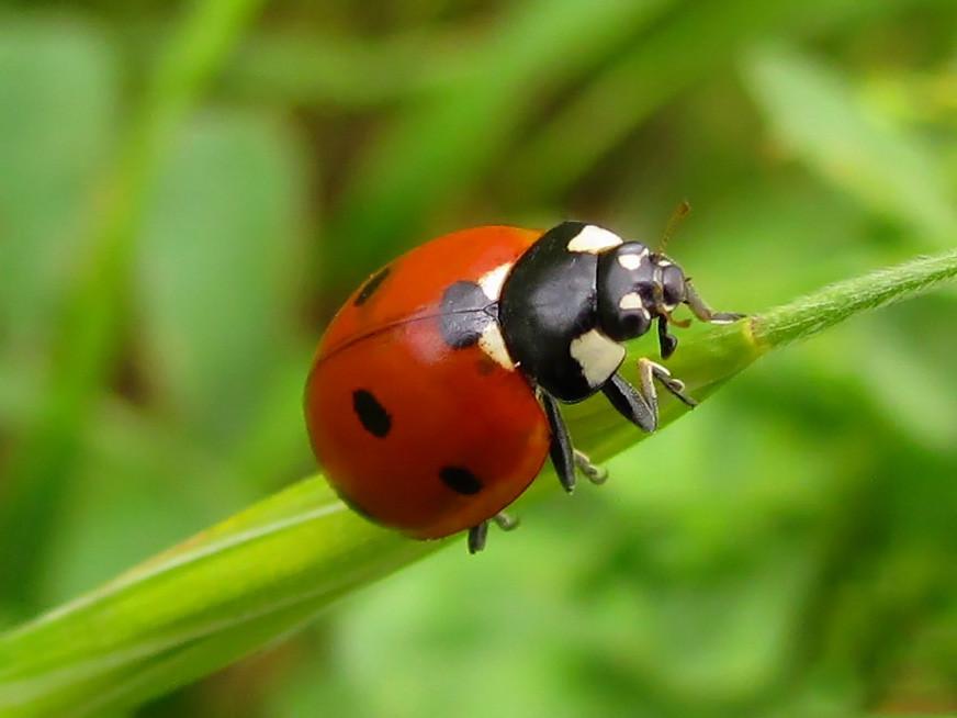 ladybug daniela flickr. Black Bedroom Furniture Sets. Home Design Ideas