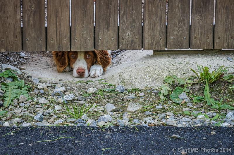 El perro que mira por debajo de la puerta