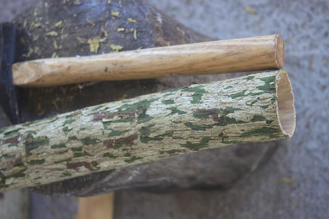 為了做樹皮布,太平洋多處上植有構樹。圖為完整脫下的構樹樹皮。圖片來源:本報資料照