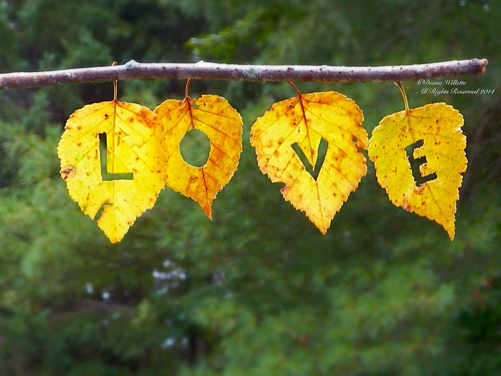 love fall love leaves all rights reserved having some