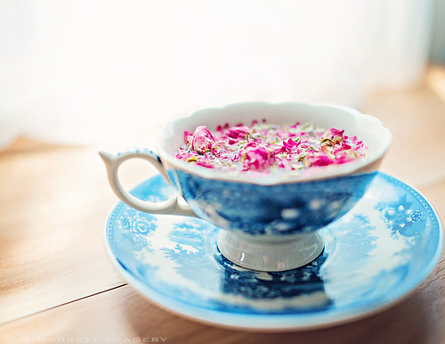 Rosebud Tea | by jcbarrettimagery