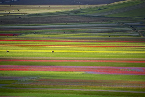 Colors in Castelluccio di Norcia