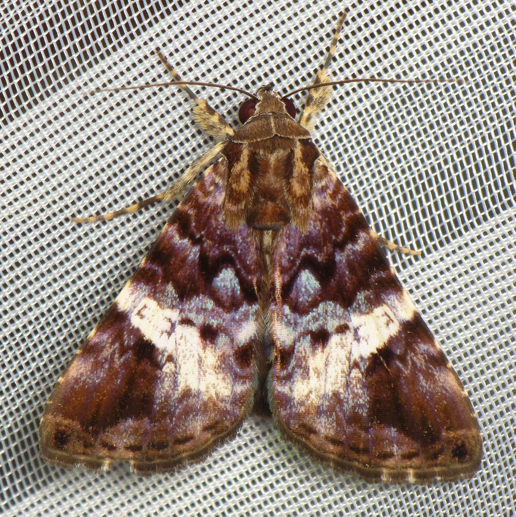 Moth | more photos from the Yasuni Research Station in my ... | 1023 x 1024 jpeg 379kB