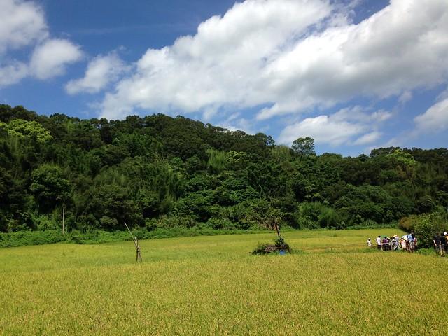 淺山地區生態系服務功能應優先被人們意識到。圖為苗栗通霄農田。攝影:廖靜蕙