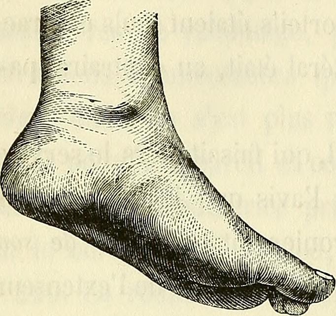 """Image from page 479 of """"Physiologie des mouvements démontrée à l'aide de l'experimentation électrique et de l'observation clinique : et applicable à l'étude des paralysies et des déformations"""" (1867)"""
