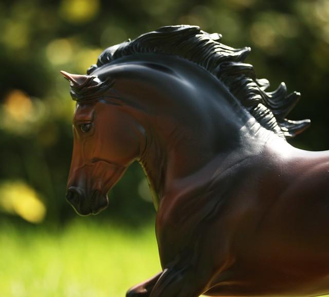 EA Fantastic Mr Copperfox - Welsh Cob - stallion - OF - EG sfgfd