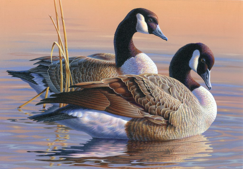 Federal Duck Federal Duck