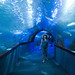 awesome underwater tank tunnel at the San Sebastian aquarium
