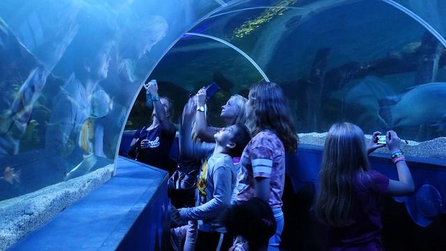 Aquarium Sea Life – Bezienswaardigheden Scheveningen Top 10