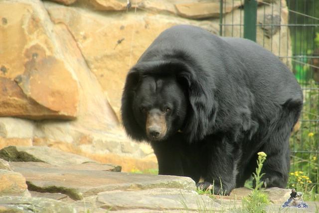 Zoo Berlin 19.06.   201598