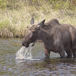 Parc national de Nechisar