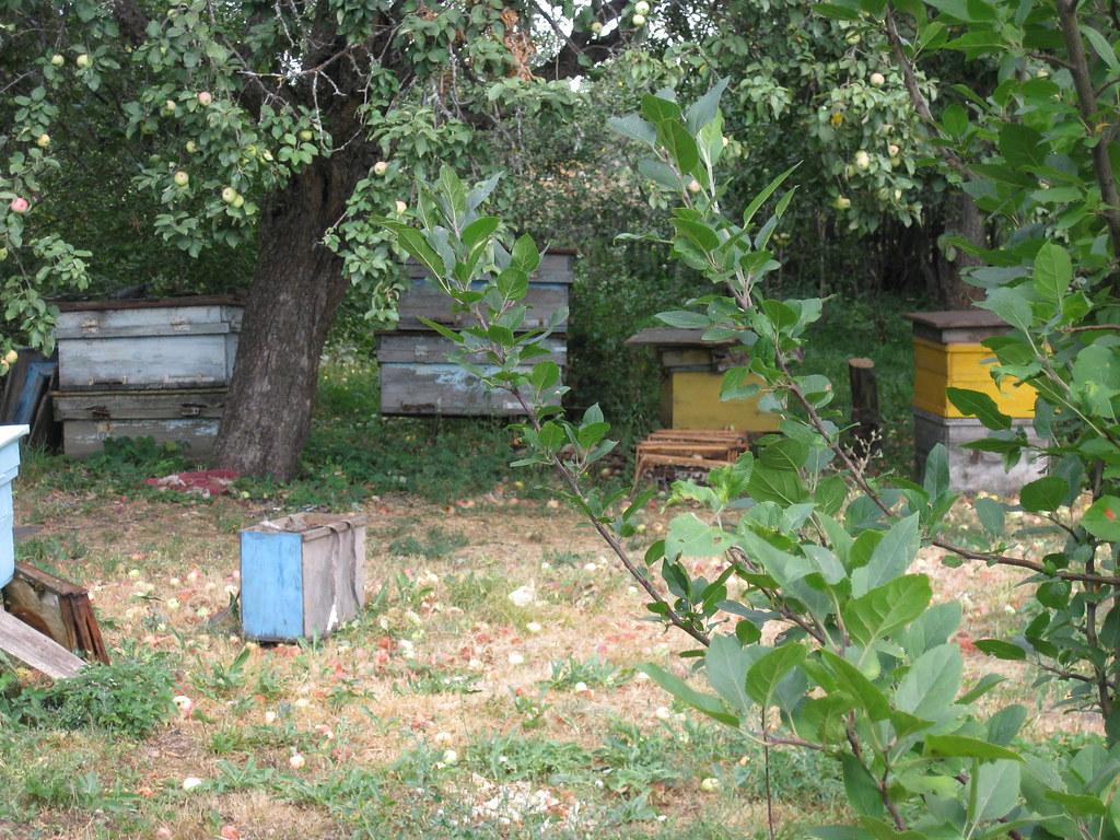 Пчелиный улей Ерошкина Николая 2014 год