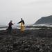 Monitoring sea star epidemic
