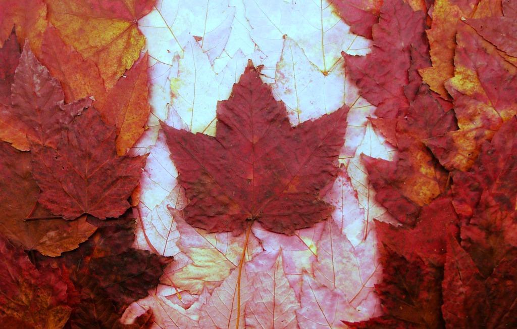 Ontario Canada Flag