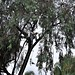 nikon nikkor 35-200mm 3.5 D3 Felling a tree